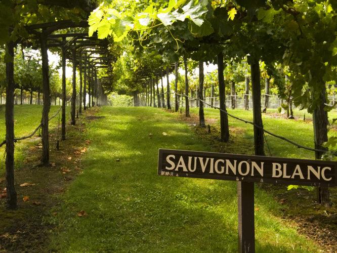 Day at Mt. Buillion Vineyard